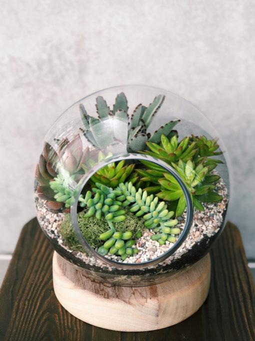 glass-terrarium-4-succculents-the-lush-lily-brisbane-florist-flower-delivery
