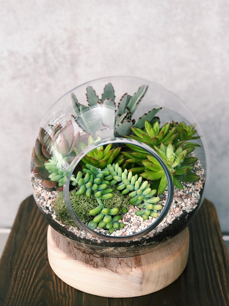 Image result for terrarium