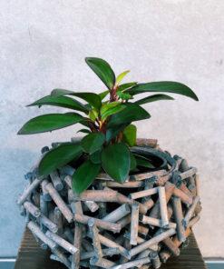 seasonal-lush-plants-brisbane-florist-the-lush-lily